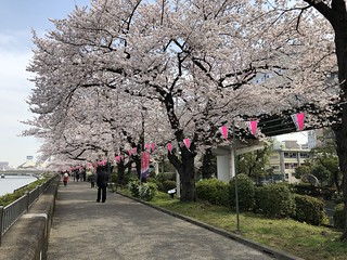 Hanami | by avbertrand1