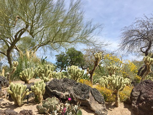 Ethel M Chocolate Cactus Garden | by Rosa Say