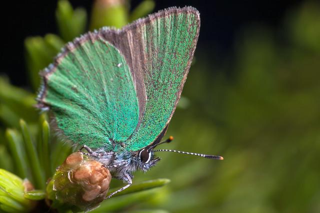 Very Green - _TNY_4563