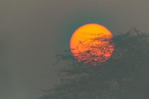 india sunrise newdelhi delhi canoneos1dmarkiv ef800mmf56lisusm asia asian tourist tourism travel ecotourism indian indiya inde indien indië cloudsstormssunsetssunrises cssssunsetsunriseambientlightthroughthetrees sultanpur bird sanctuary