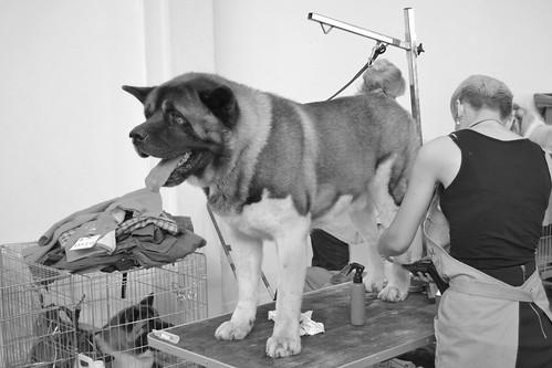 un día de perros   by bassmatroncomplex