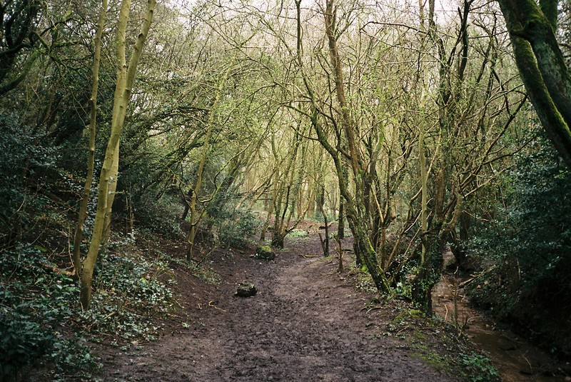 Coombe Valley Nature Reserve