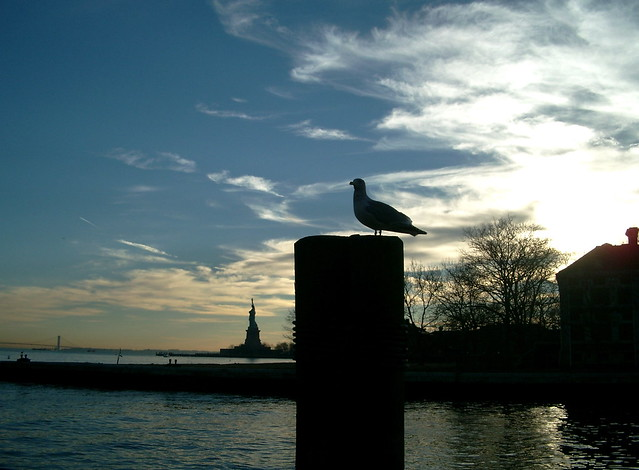From Ellis island in the evening
