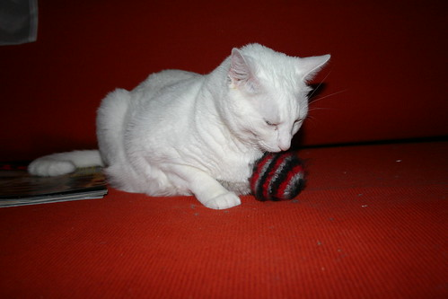 After all these things, the knitted ball will always be his favorite.  At least until he finds the mouse.