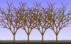 favourites tree?