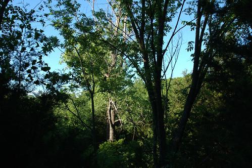 Birding Area - Spring Creek Preserve