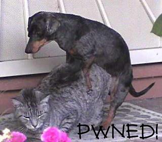 Dog Sex Cat