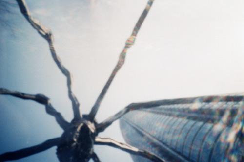 Spider & Building