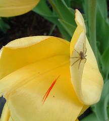 44 spider