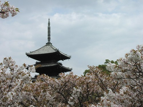 Pagoda rising above the cherry trees | by tiseb