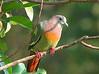Kuala Gula Bird Sanctuary, Perak