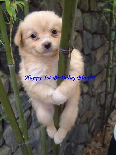 HappyBdayBlog