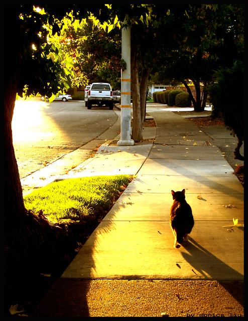 Light + Cat