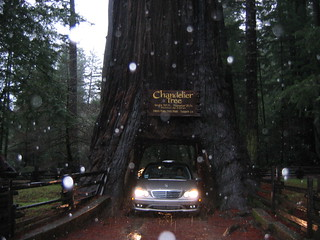 Driving thru the Chandelier Tree | by jessicafm