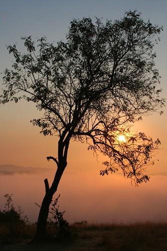 tree silhouette sunrise ebrpd fairmontridge