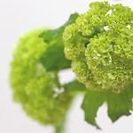 snowball lime
