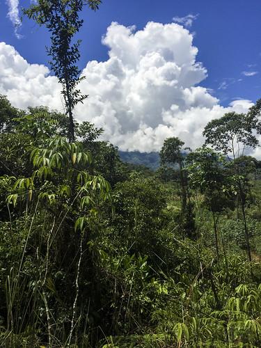 elpangui provinciademoronasantiago ecuador orchid tour andes mountains orchids plants plant flower