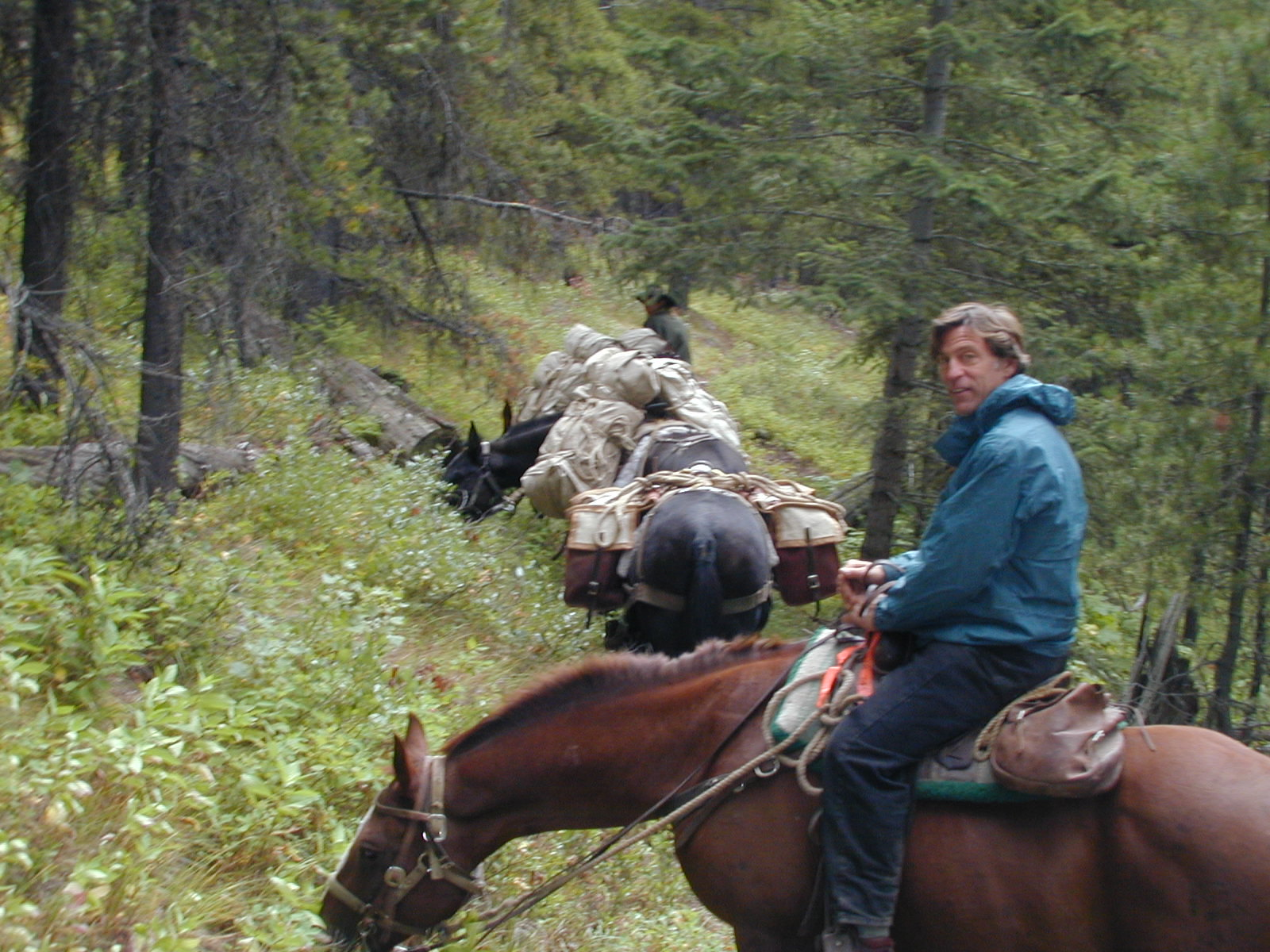Rocky Mountain Horse - Horse Scanner