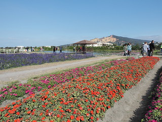 Beds of flowers with Huoyan Mountain 火焰山 in the background. | by huislaw