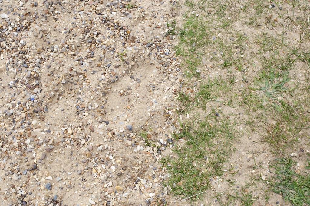 Beach Ground