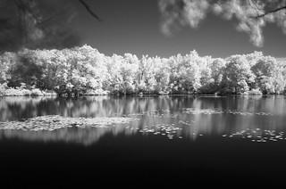 Horn pond IR