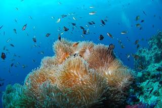 Scuba Diving corals | by www.travelosio.com