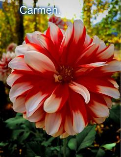Feliz Jueves Florido Amig At S Carmen Cordero Flickr