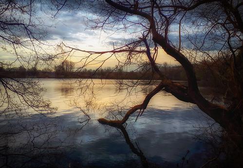 sechsseenplatte duisburg wedau duisburgwedau see abendstimmung wasserspiegelung reflection evening moody eveningmood tree water lake landscape nrw