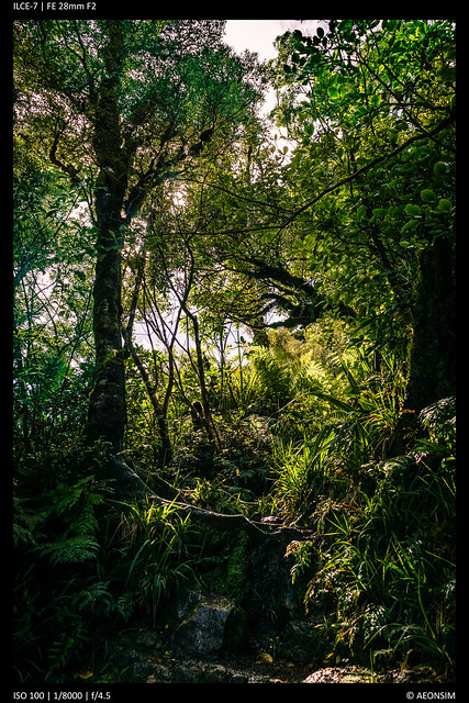 Mount Te Aroha - Track