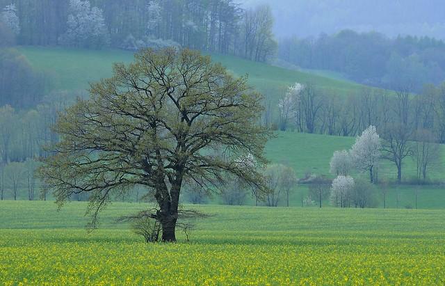 Krajina u Skorošic