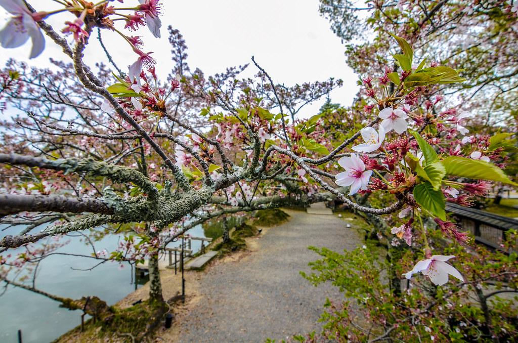 Daikaku-ji flowers