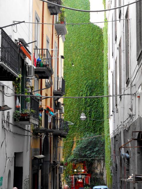 Figurari alley in Naples with creeper