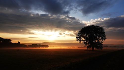 göttingen sunrise sonnenaufgang landscape tree fog