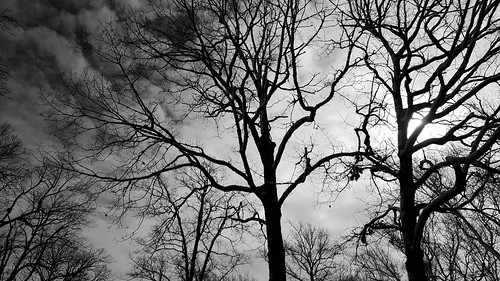 snow blackandwhite monochrome snowscape winter scenery delmarva nature wintertime trees blackandwhitephotos scenicdelmarva winterscenery treebranches treeart landscape delmarvapeninsula sussexcountydelaware sussexde delaware southerndelawaware firststate selbyville selbyvillede march2018