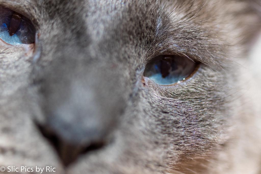 Ricky blue eyes