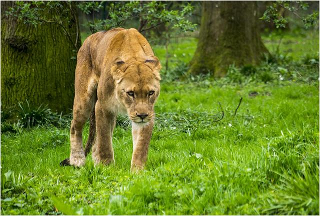 Predator(UK)
