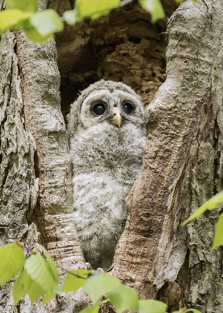 Owlet World View