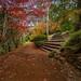 Image: Laburnum Steps