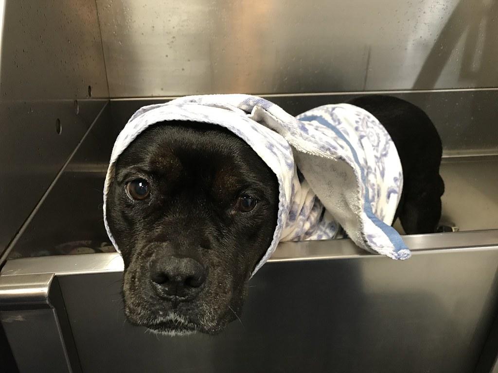 Bonnie getting a bath