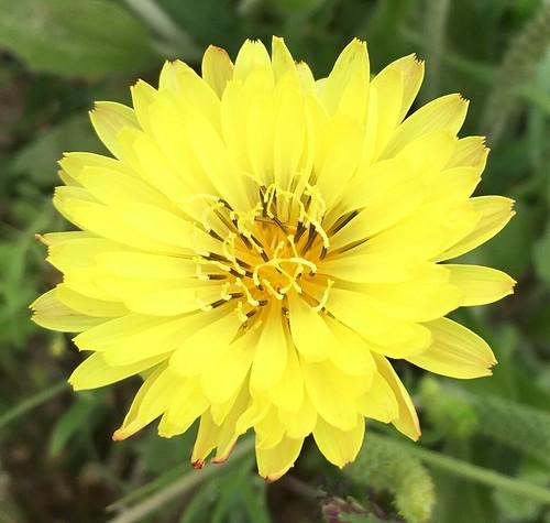 pipecreek texas usa 081 flowers wildflowers weeds apple iphonese