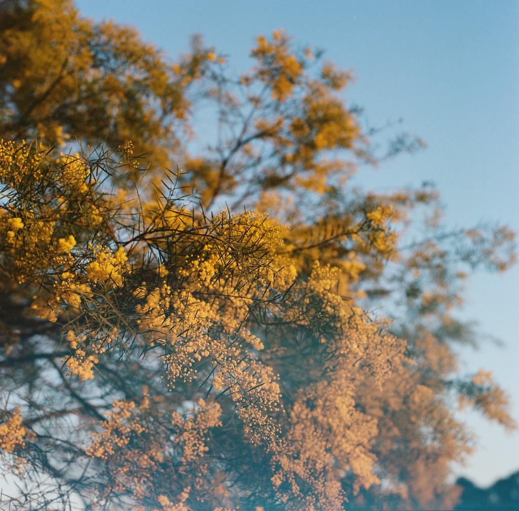 Marsfield, NSW - Kodak Portra 400