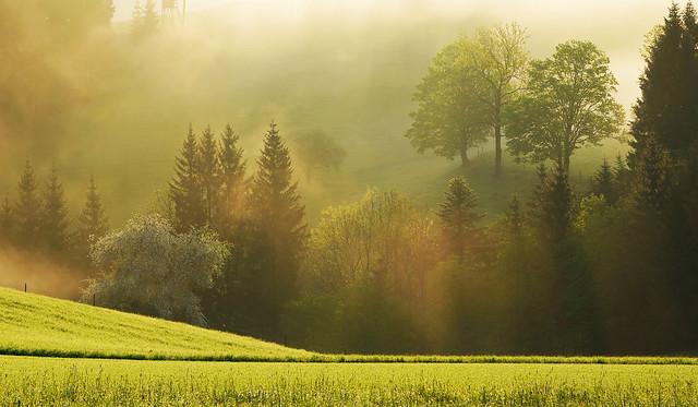 Leichter Morgennebel im Tal