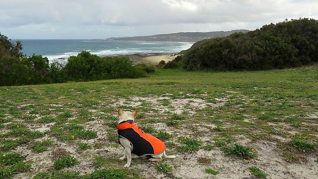 Smokey relaxing and enjoying the view at Swansea Heads