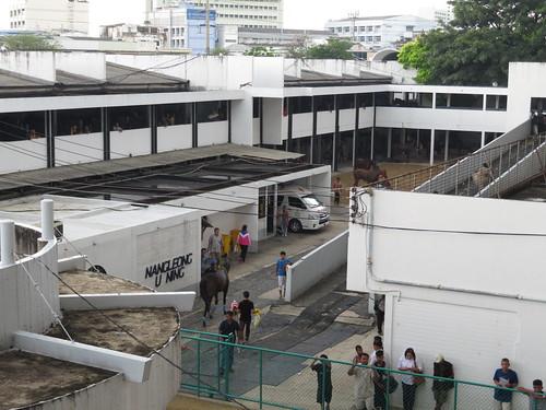 ロイヤルターフクラブ競馬場の二階建て馬房