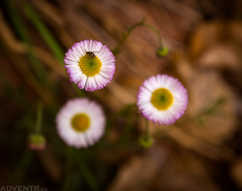 Step Wildflowers