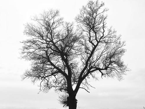 mono uk england bw tree britain essex gb blackandwhite