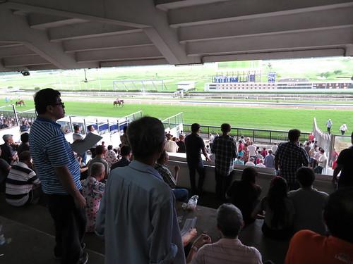 ロイヤルターフクラブ競馬場のスタンド3階から馬場を見る人