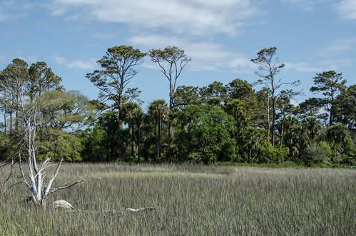 landscapephotography southcarolina hammockislandsouthcarolina hammockislandsc edisto edistoisland edistobeachstatepark edistoislandsc eastcoast