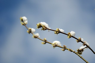 May is Spring, no kidding?   by Andrew V. Roubtsov