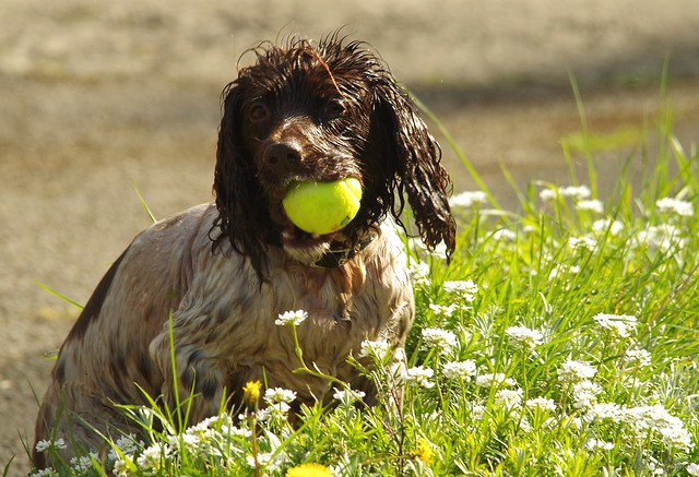 dog with a ball castleton (1)